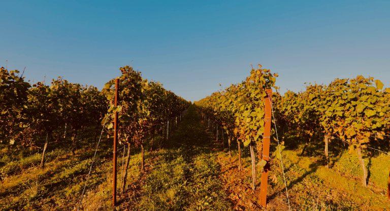 die südliche Weinstrasse im Herbst- ein Traum.